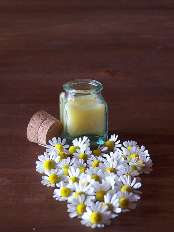 CAMOMILE MOISTURIZING CREAM HAS OLIVER OIL  AS PRINCIPAL INGREDIENT