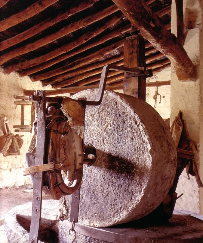Jaganta press for elaborate olive oil.