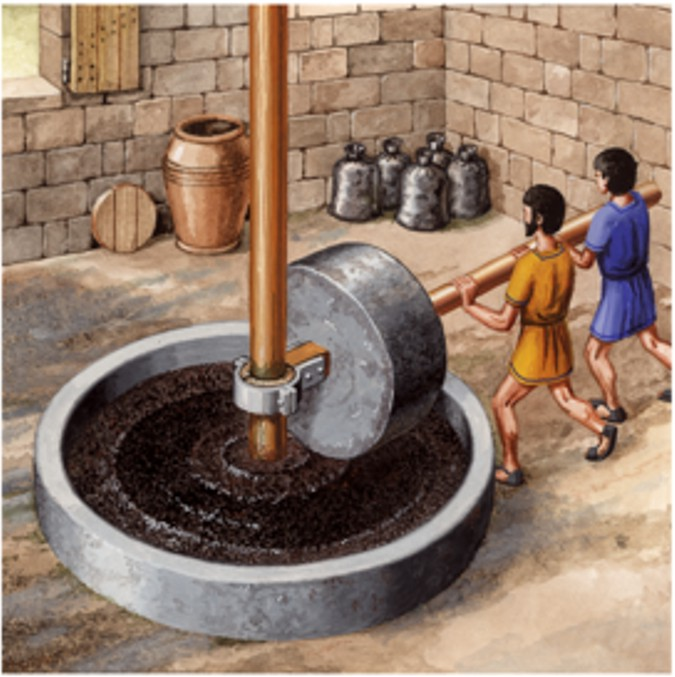 The olearia millstone very has been used in the elaboration of the olive oil.