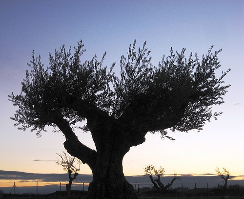 The olive tree and olive oil were were elements of great symbolism in Greece