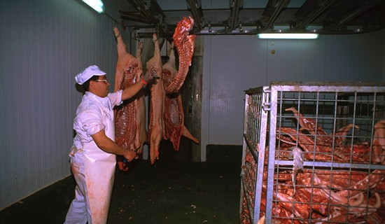 In the cutting rooms joined to the slaughterhouses the cutting process is carried out hot