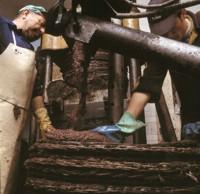 M�todo tradicional para la elaboraci�n del aceite de oliva