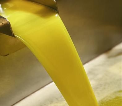 Chorro de aceite de oliva virgen extra, saliendo del primer prensado.