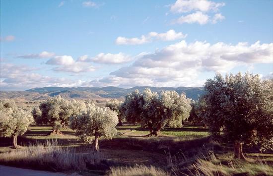 Debemos elegir un buen sistema de cultivo, y esto depender� seg�n el tipo de terreno en el que vayamos a cultivar