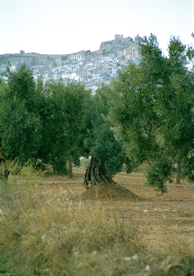 El aceite de oliva tiene propiedades muy beneficiosas para la salud