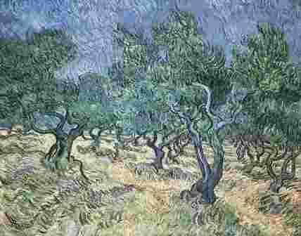 Campo de olivos obra de Van Gogh