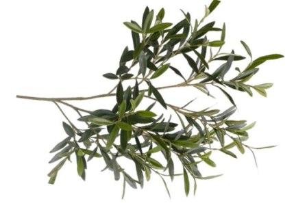 Rama de olivo como ofrenda