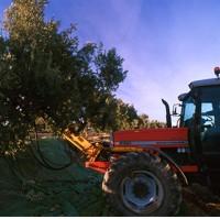 Olivicultura y oleicultura