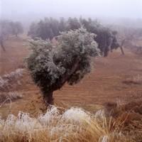 Poesía del aceite de oliva