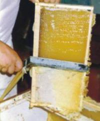 Para la salida de la miel de un panal operculado deben cortarse los sellos de cera.
